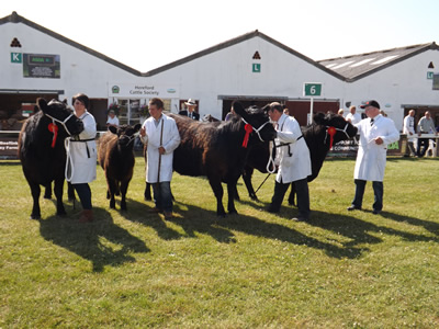 yorkshire show 2013 070